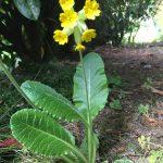 Jeden Monat neu die Heilpflanze des Monats